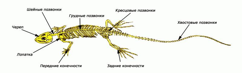 http://lib.znate.ru/pars_docs/refs/251/250038/250038_html_449a93b8.png
