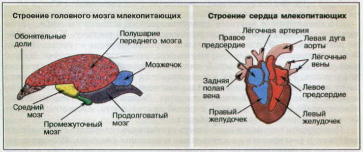 http://www.blgy.ru/images/biology7t/pic99.png