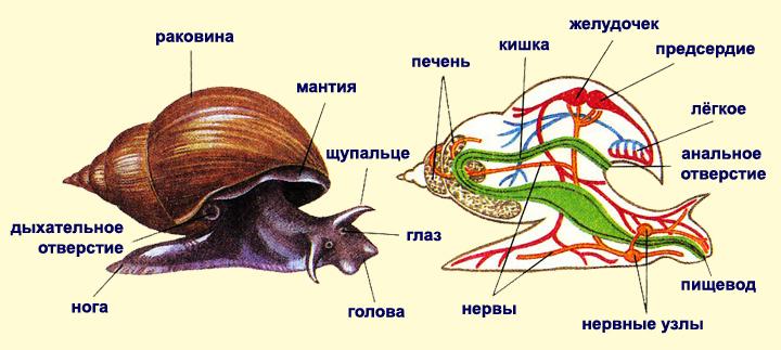 http://cor.edu.27.ru/dlrstore/b6bad5aa-daba-46b7-baef-403c6cd8d0f5/%5BBI7GI_5-02%5D_%5BIL_02%5D-k1.jpg