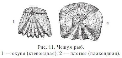http://festival.1september.ru/articles/615317/img3.jpg