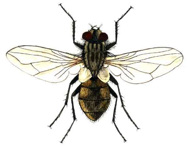 C:\Users\Деля\Pictures\Борьба-с-мухами-уничтожение-мух.-Как-избавиться-и-вывести-мух.jpg