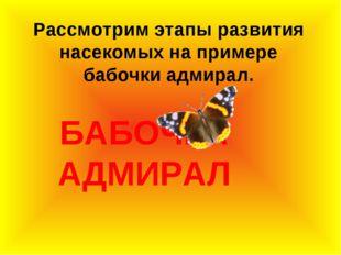 БАБОЧКА АДМИРАЛ Рассмотрим этапы развития насекомых на примере бабочки адмир