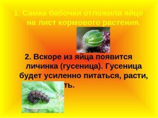 1. Самка бабочки отложила яйцо на лист кормового растения. 2. Вскоре из яйца