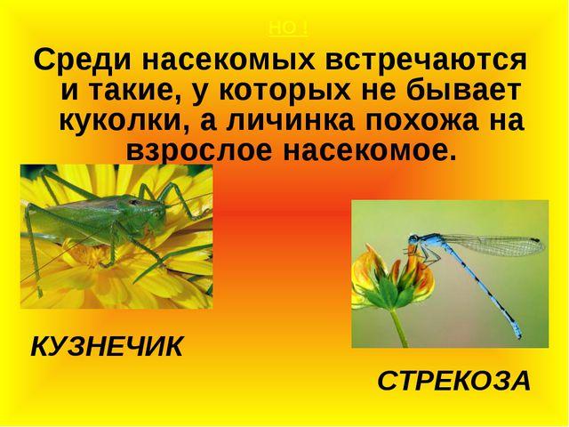 НО ! Среди насекомых встречаются и такие, у которых не бывает куколки, а лич...