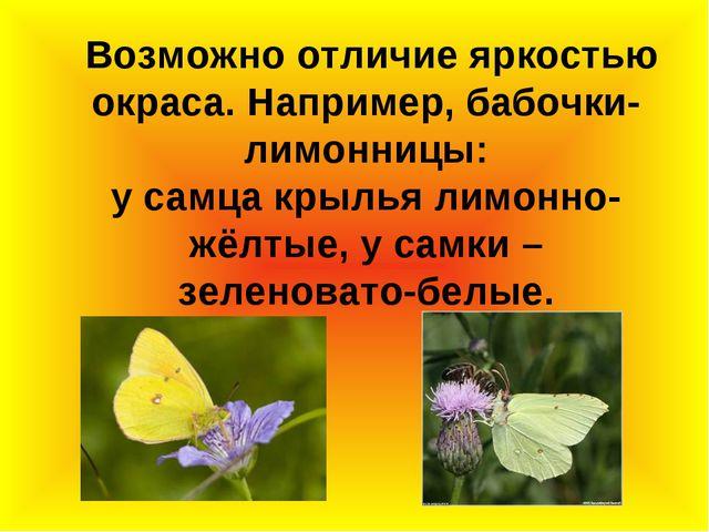 Возможно отличие яркостью окраса. Например, бабочки-лимонницы: у самца крыль...