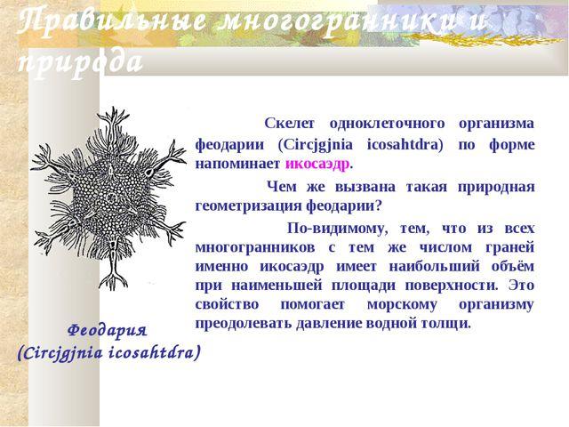 Правильные многогранники и природа Скелет одноклеточного организма феодарии (...
