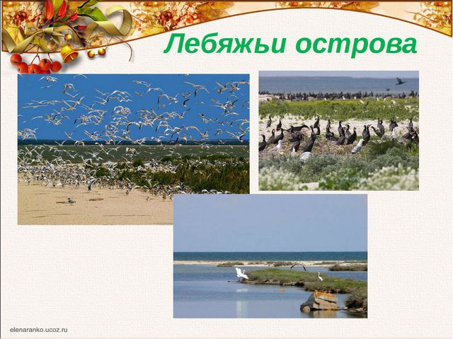 Лебяжьи острова