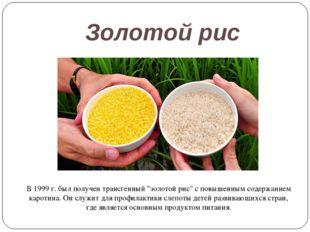 """Золотой рис В 1999 г. был получен трансгенный """"золотой рис"""" с повышенным соде"""