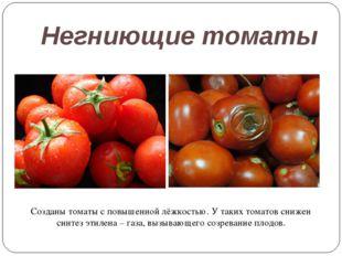 Негниющие томаты Созданы томаты с повышенной лёжкостью. У таких томатов сниже