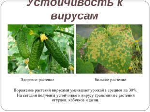 Устойчивость к вирусам Здоровое растение Больное растение Поражение растений