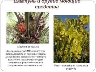 Шампунь и другие моющие средства Рапс – важнейшая масличная культура Маслична