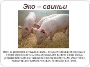 Эко – свиньи Навоз со свиноферм, попадая в водоёмы, вызывает бурный рост водо