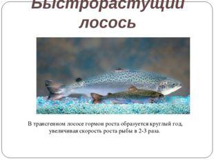 Быстрорастущий лосось В трансгенном лососе гормон роста образуется круглый го