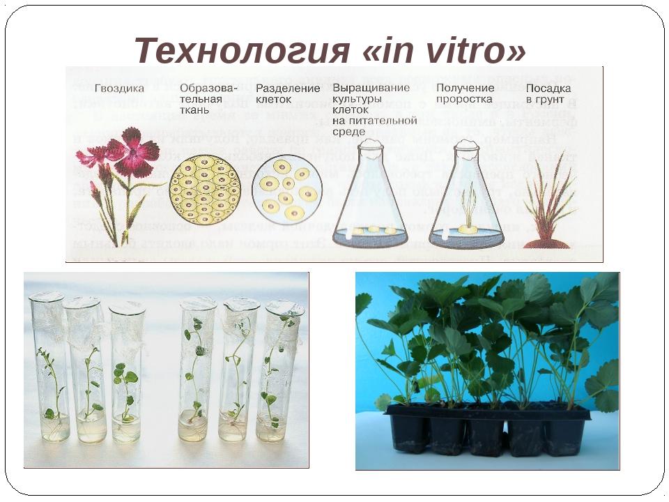 Технология «in vitro»