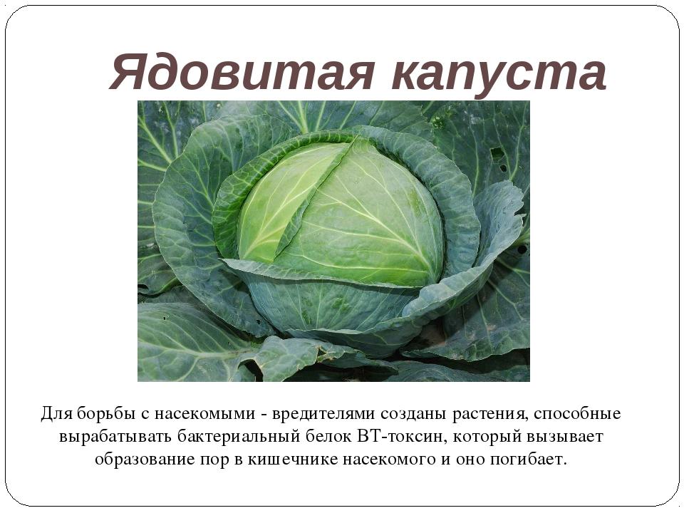 Ядовитая капуста Для борьбы с насекомыми - вредителями созданы растения, спос...