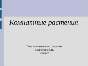 Комнатные растения Учитель начальных классов Гаврилова Е.И. 2 класс