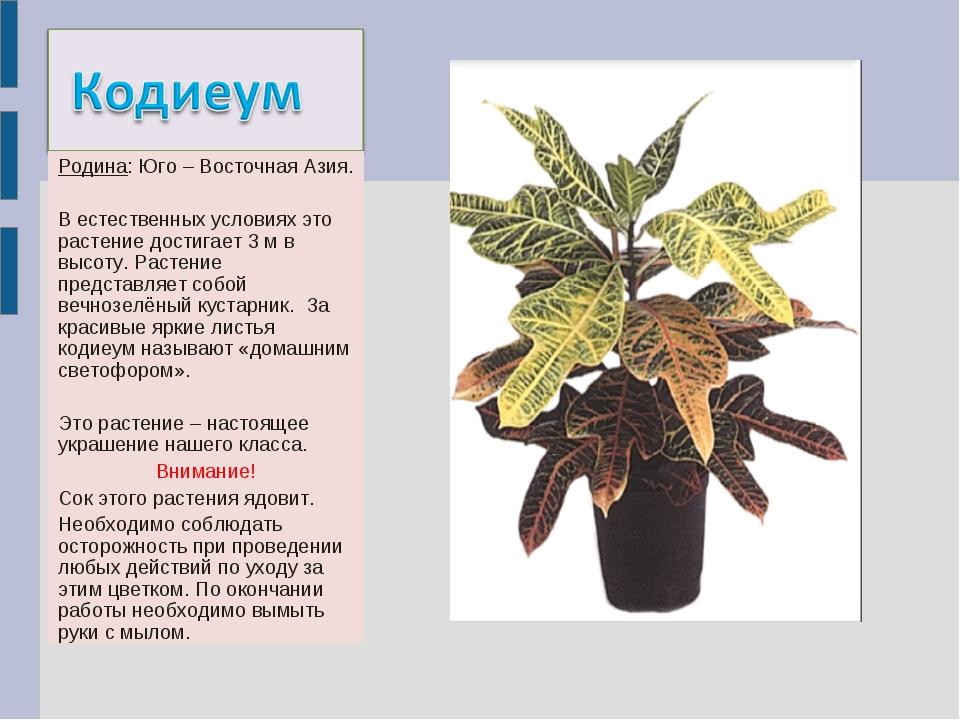 Родина: Юго – Восточная Азия. В естественных условиях это растение достигает...