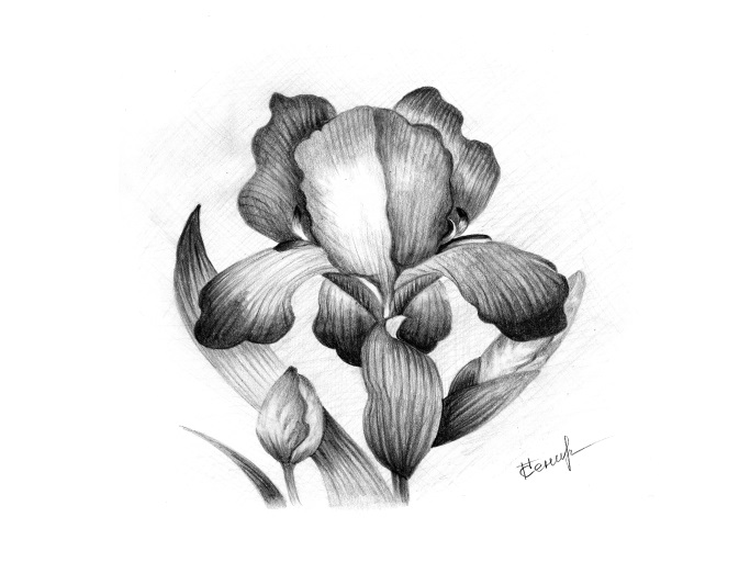 http://legendaart.narod.ru/img/Iris.jpg
