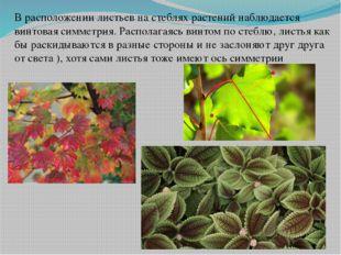 В расположении листьев на стеблях растений наблюдается винтовая симметрия. Ра