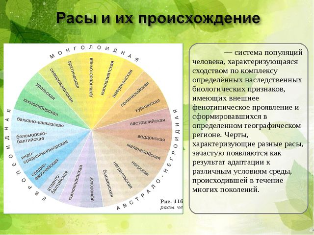 Ра́са— система популяций человека, характеризующаяся сходством по комплексу...