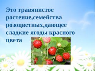 Это травянистое растение,семейства розоцветных,дающее сладкие ягоды красного