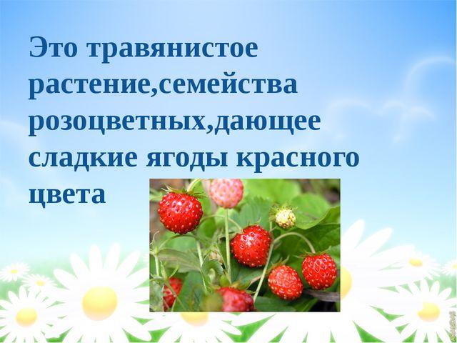 Это травянистое растение,семейства розоцветных,дающее сладкие ягоды красного...