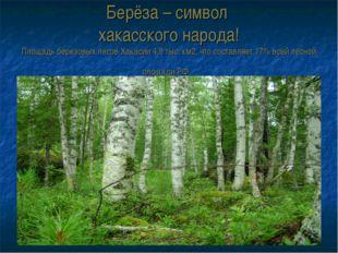 Берёза – символ хакасского народа! Площадь березовых лесов Хакасии 4,8 тыс. к