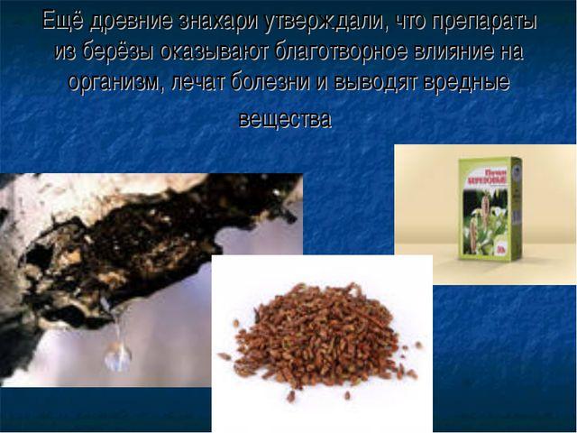 Ещё древние знахари утверждали, что препараты из берёзы оказывают благотворно...