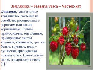 Земляника – Fragaria vesca – Честек-кат Описание: многолетнее травянистое рас