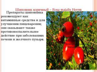Шиповник коричный – Rosa majalis Herrm Препараты шиповника рекомендуют как ви