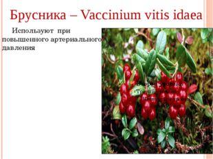Брусника – Vaccinium vitis idaea Используют при повышенного артериального да