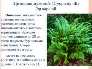 Щитовник мужской- Dryopteris filix Эр кара-ай Описание: многолетнее травянис