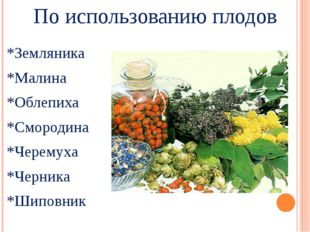 По использованию плодов *Земляника *Малина *Облепиха *Смородина *Черемуха *Че