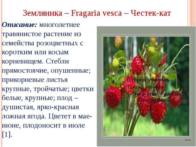 Земляника – Fragaria vesca – Честек-кат Описание: многолетнее травянистое рас...
