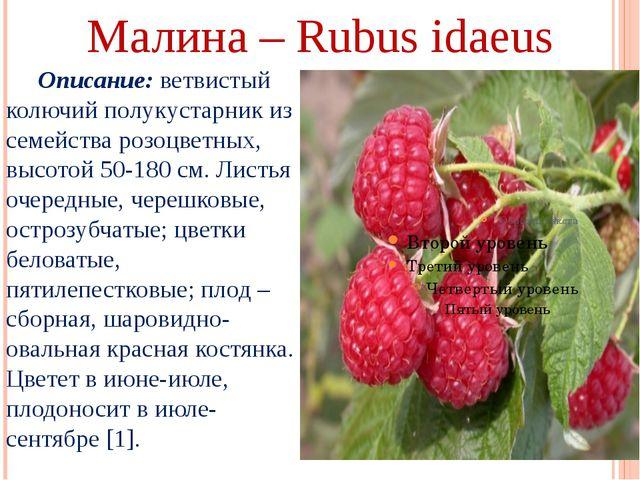 Малина – Rubus idaeus Описание: ветвистый колючий полукустарник из семейства...