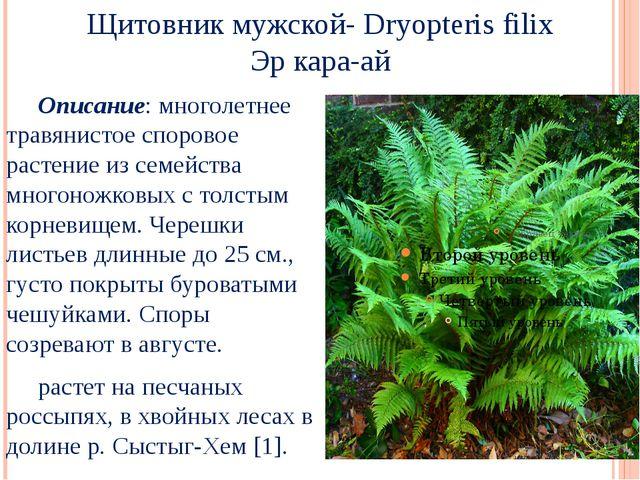 Щитовник мужской- Dryopteris filix Эр кара-ай Описание: многолетнее травянис...