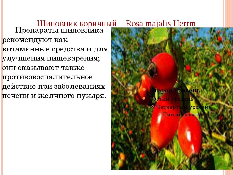 Шиповник коричный – Rosa majalis Herrm Препараты шиповника рекомендуют как ви...
