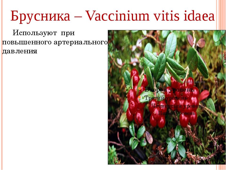 Брусника – Vaccinium vitis idaea Используют при повышенного артериального да...