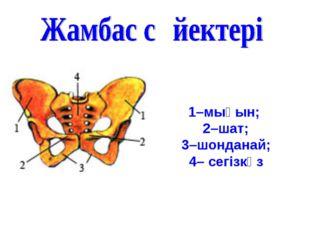 1–мықын; 2–шат; 3–шонданай; 4– сегізкөз