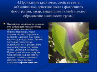 4.Проявление квантовых свойств света: а)Химическое действие света ( фотосинте