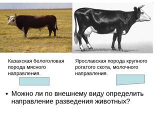 Можно ли по внешнему виду определить направление разведения животных? Казахск