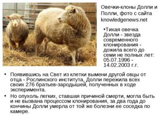 Появившись на Свет из клетки вымени другой овцы от отца - Рослинского институ