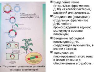Выделение генов (отдельных фрагментов ДНК) из клеток бактерий, растений или ж
