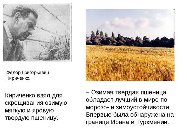 Федор Григорьевич Кириченко. – Озимая твердая пшеница обладает лучший в мире...