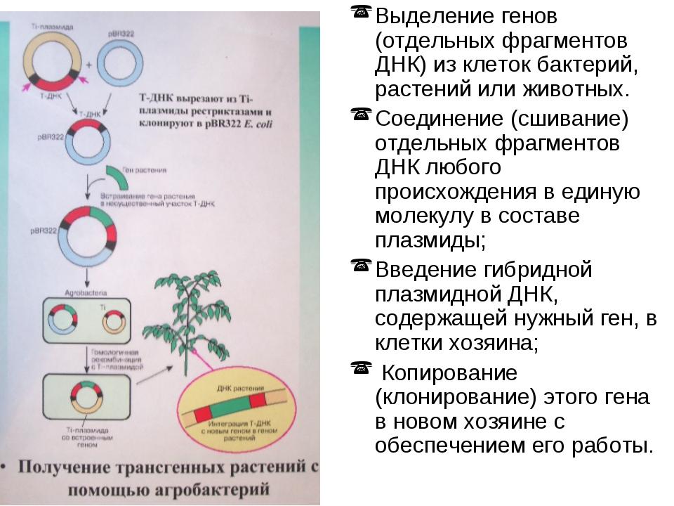 Выделение генов (отдельных фрагментов ДНК) из клеток бактерий, растений или ж...