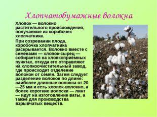 Хлопчатобумажные волокна Хлопок — волокно растительного происхождения, получа