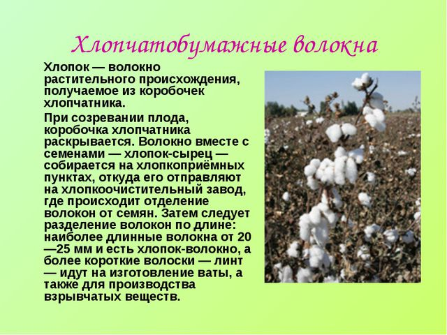 Хлопчатобумажные волокна Хлопок — волокно растительного происхождения, получа...