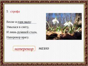 строфа Весне и горя мало: Умылася в снегу, И лишь румяней стала, Наперекор вр