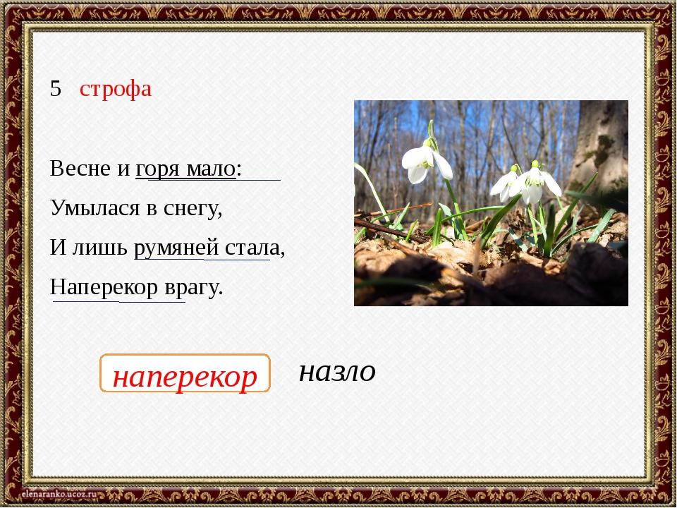 строфа Весне и горя мало: Умылася в снегу, И лишь румяней стала, Наперекор вр...