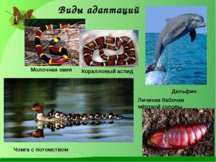 Молочная змея Коралловый аспид Дельфин Личинка бабочки мёртвой головы Чомга с